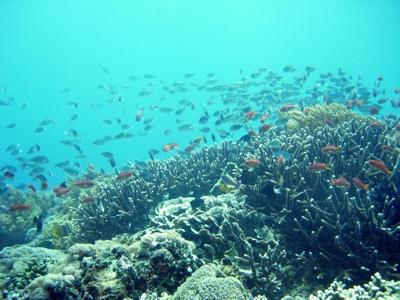 Bali_3c